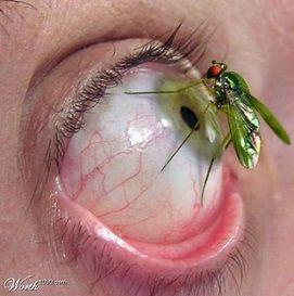 Entomofobia, Miedo a los Insectos
