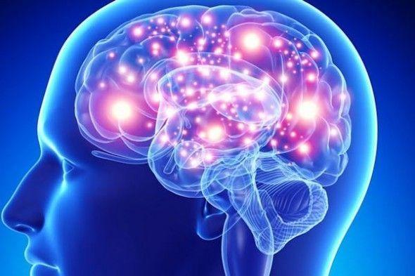 Cuántos Cerebros Tenemos Los Humanos