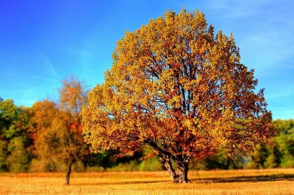 Cómo Prevenir la Astenia Otoñal