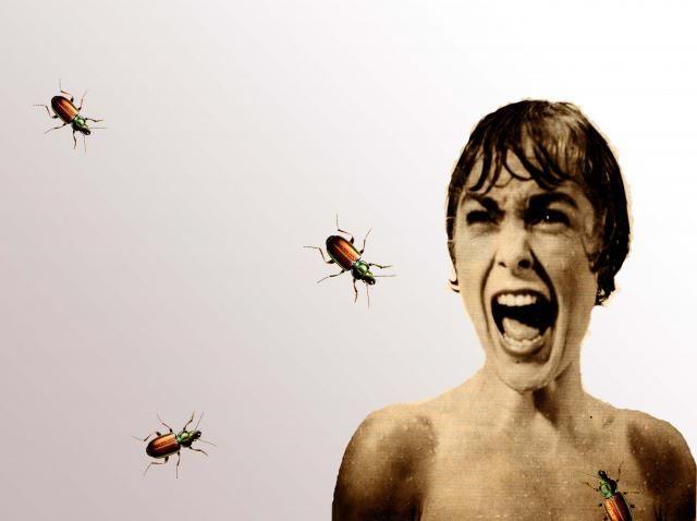 Entomofobia