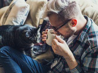 Los beneficios de vivir con un gato