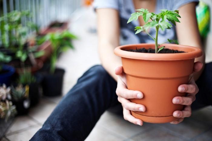 cuidar plantas
